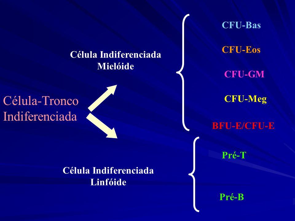 Célula-Tronco Indiferenciada Célula Indiferenciada Mielóide Célula Indiferenciada Linfóide CFU-Bas CFU-Eos CFU-GM CFU-Meg BFU-E/CFU-E Pré-T Pré-B