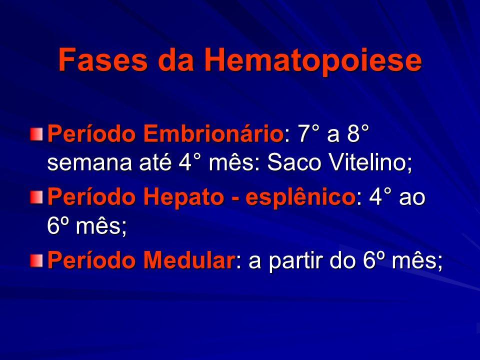 Fases da Hematopoiese Período Embrionário: 7° a 8° semana até 4° mês: Saco Vitelino; Período Hepato - esplênico: 4° ao 6º mês; Período Medular: a part