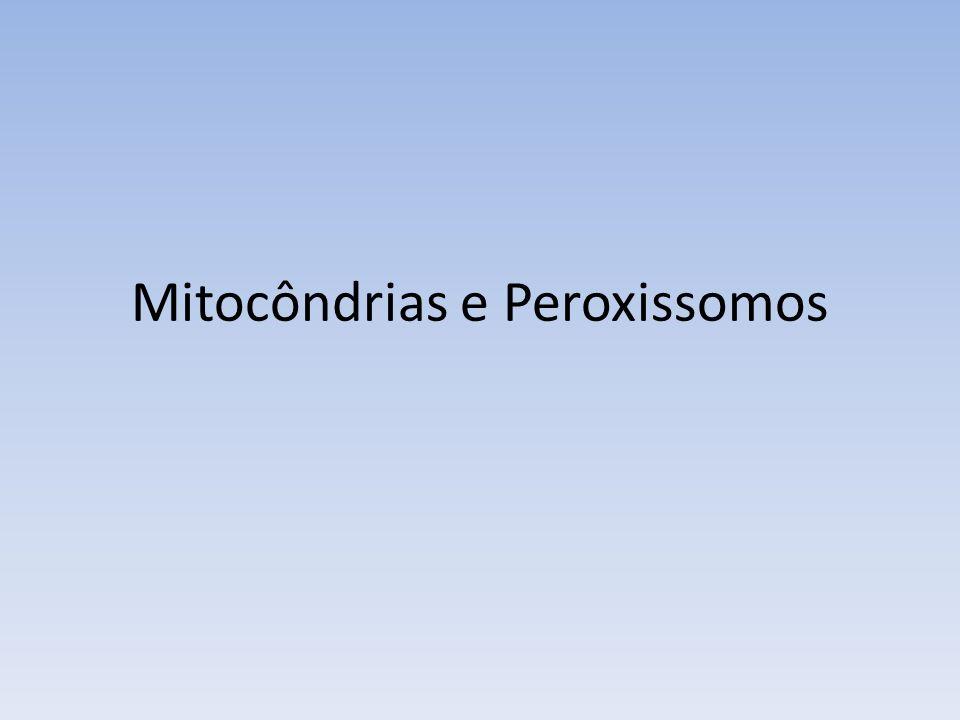 Mitocôndria Características Gerais – Presença de duas membranas – Externa lisa e interna formando cristas