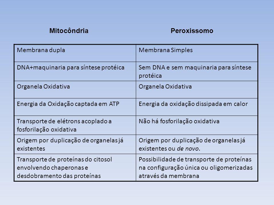 MitocôndriaPeroxissomo Membrana duplaMembrana Simples DNA+maquinaria para síntese protéicaSem DNA e sem maquinaria para síntese protéica Organela Oxid