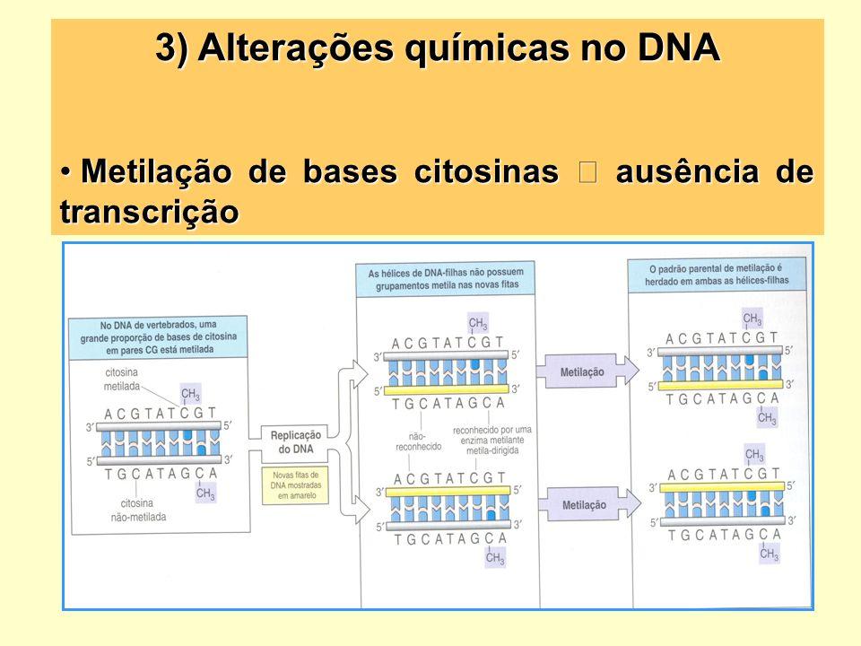 3) Alterações químicas no DNA Metilação de bases citosinas ausência de transcrição Metilação de bases citosinas ausência de transcrição