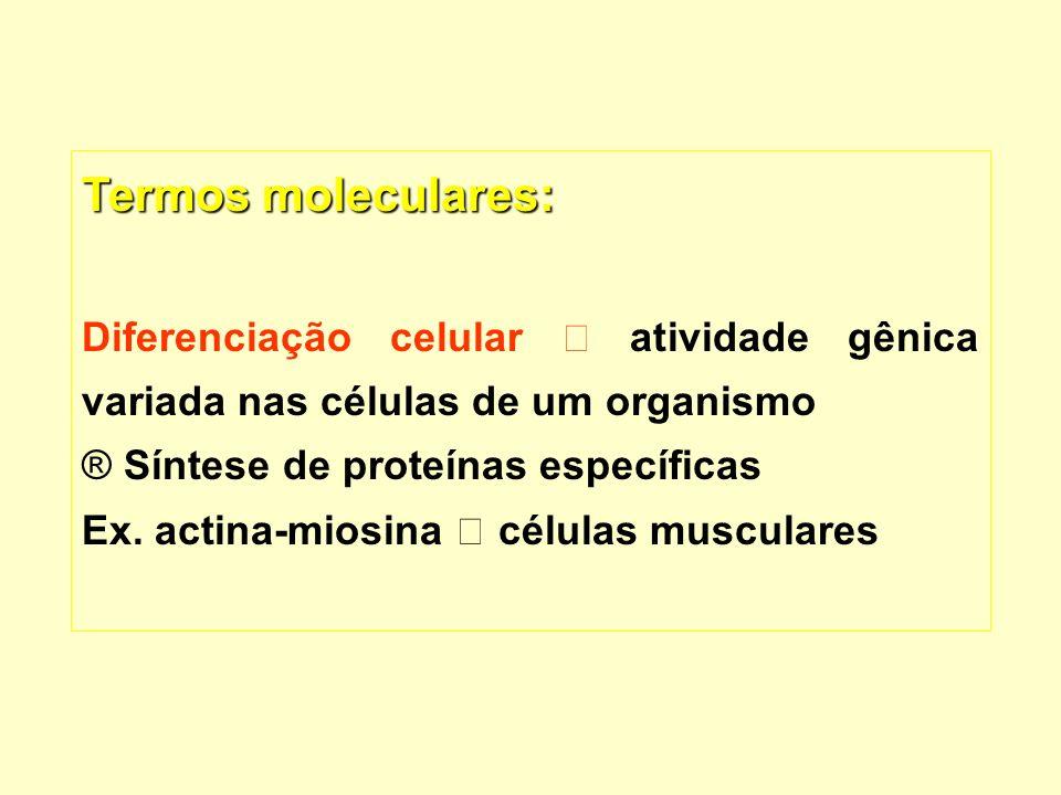 Termos moleculares: Diferenciação celular atividade gênica variada nas células de um organismo ® ® Síntese de proteínas específicas Ex. actina-miosina