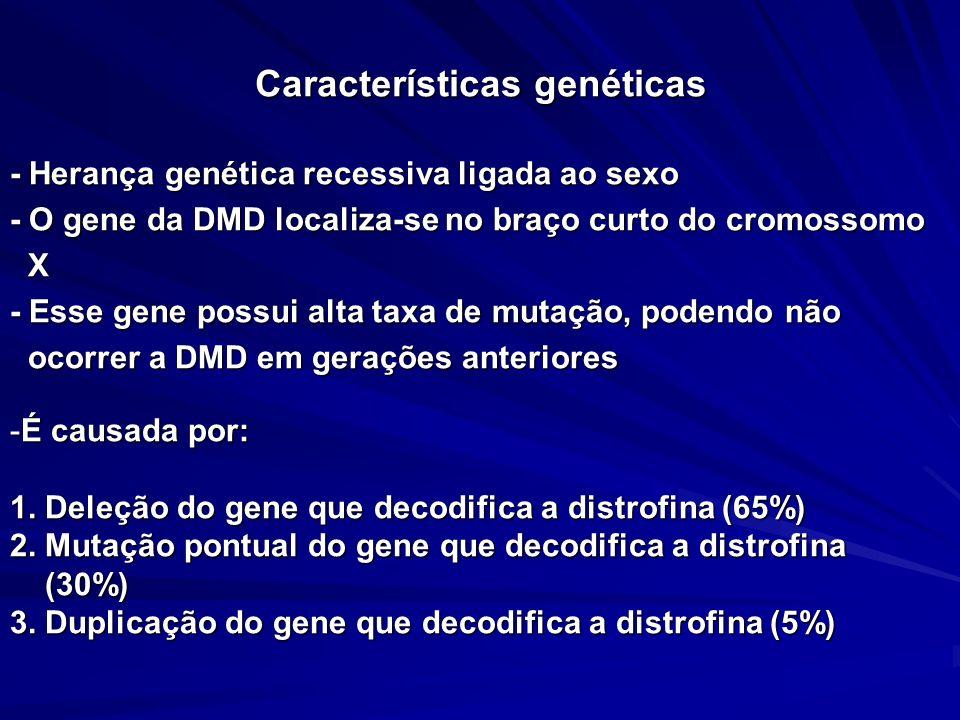 Características genéticas - Herança genética recessiva ligada ao sexo - O gene da DMD localiza-se no braço curto do cromossomo X - Esse gene possui al