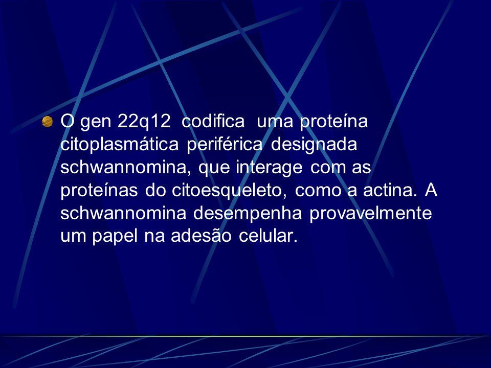 O gen 22q12 codifica uma proteína citoplasmática periférica designada schwannomina, que interage com as proteínas do citoesqueleto, como a actina. A s