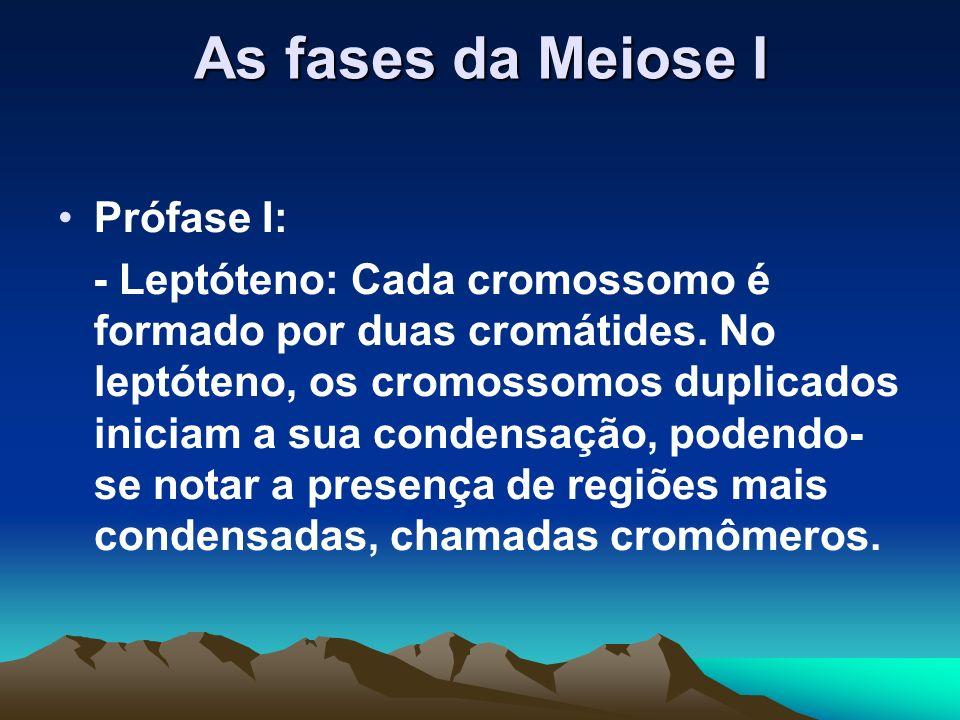 A prófase I da meiose I foi dividida em 5 subfases consecutivas: –Leptóteno –Zigóteno –Paquíteno –Diplóteno –Diacinese.