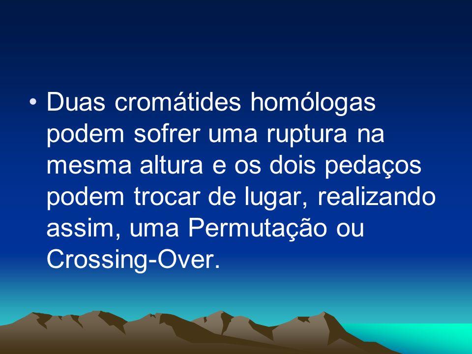 -Cromátides- irmãs: Originam de um mesmo cromossomo; - Cromátides- homólogas: Originam de cromossomos homólogos.
