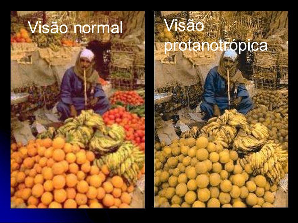 Visão normal Visão protanotrópica