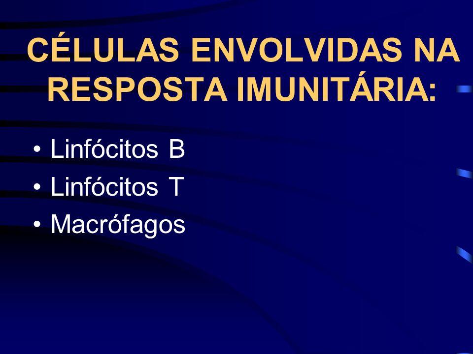 CÉLULAS ENVOLVIDAS NA RESPOSTA IMUNITÁRIA: Linfócitos B Linfócitos T Macrófagos
