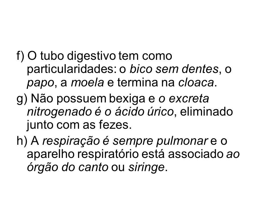f) O tubo digestivo tem como particularidades: o bico sem dentes, o papo, a moela e termina na cloaca. g) Não possuem bexiga e o excreta nitrogenado é
