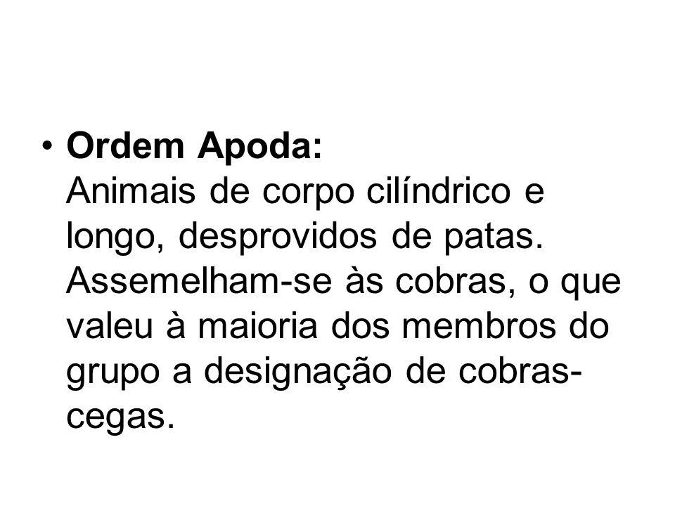 Ordem Apoda: Animais de corpo cilíndrico e longo, desprovidos de patas. Assemelham-se às cobras, o que valeu à maioria dos membros do grupo a designaç