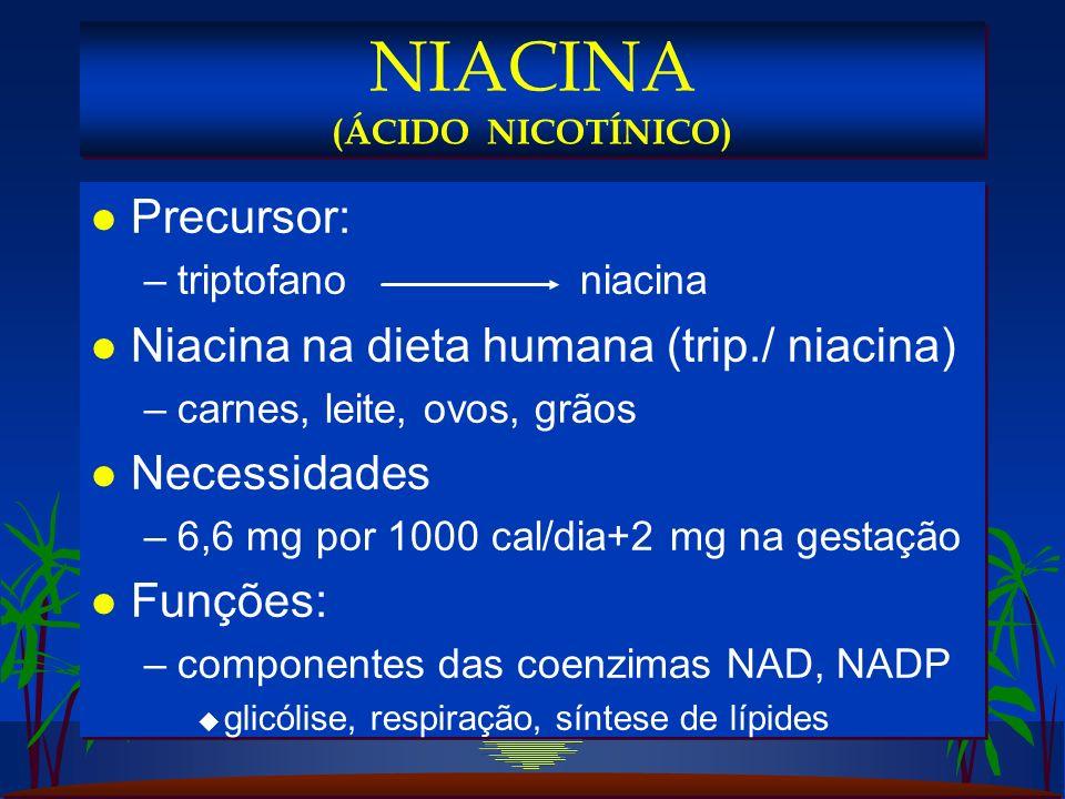 l Precursor: –triptofano niacina l Niacina na dieta humana (trip./ niacina) –carnes, leite, ovos, grãos l Necessidades –6,6 mg por 1000 cal/dia+2 mg na gestação l Funções: –componentes das coenzimas NAD, NADP u glicólise, respiração, síntese de lípides l Precursor: –triptofano niacina l Niacina na dieta humana (trip./ niacina) –carnes, leite, ovos, grãos l Necessidades –6,6 mg por 1000 cal/dia+2 mg na gestação l Funções: –componentes das coenzimas NAD, NADP u glicólise, respiração, síntese de lípides NIACINA (ÁCIDO NICOTÍNICO)