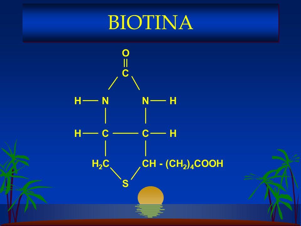 S C C H2CH2C NN C CH - (CH 2 ) 4 COOH HH HH O BIOTINA