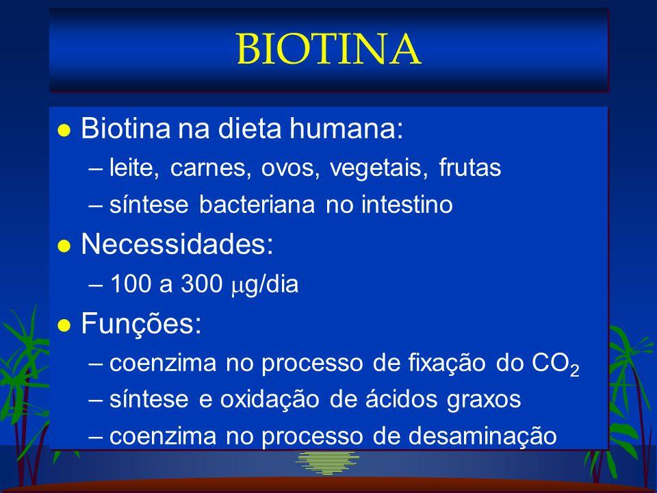 l Biotina na dieta humana: –leite, carnes, ovos, vegetais, frutas –síntese bacteriana no intestino l Necessidades: –100 a 300 g/dia l Funções: –coenzima no processo de fixação do CO 2 –síntese e oxidação de ácidos graxos –coenzima no processo de desaminação l Biotina na dieta humana: –leite, carnes, ovos, vegetais, frutas –síntese bacteriana no intestino l Necessidades: –100 a 300 g/dia l Funções: –coenzima no processo de fixação do CO 2 –síntese e oxidação de ácidos graxos –coenzima no processo de desaminação BIOTINA