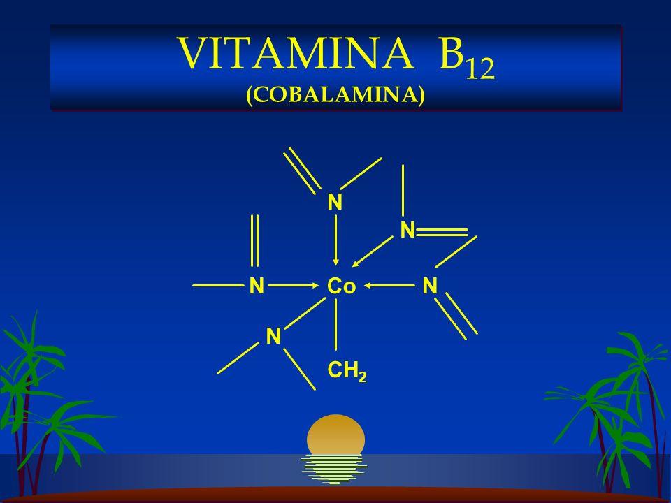 N CH 2 Co N N N N VITAMINA B 12 (COBALAMINA)