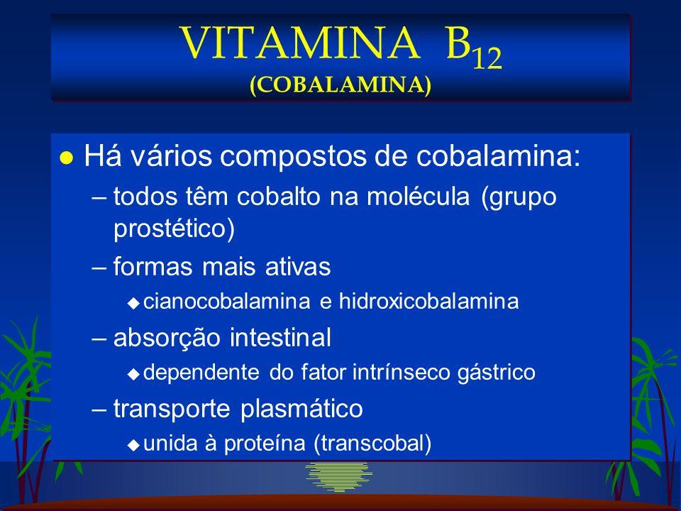 l Há vários compostos de cobalamina: –todos têm cobalto na molécula (grupo prostético) –formas mais ativas u cianocobalamina e hidroxicobalamina –absorção intestinal u dependente do fator intrínseco gástrico –transporte plasmático u unida à proteína (transcobal) l Há vários compostos de cobalamina: –todos têm cobalto na molécula (grupo prostético) –formas mais ativas u cianocobalamina e hidroxicobalamina –absorção intestinal u dependente do fator intrínseco gástrico –transporte plasmático u unida à proteína (transcobal) VITAMINA B 12 (COBALAMINA)