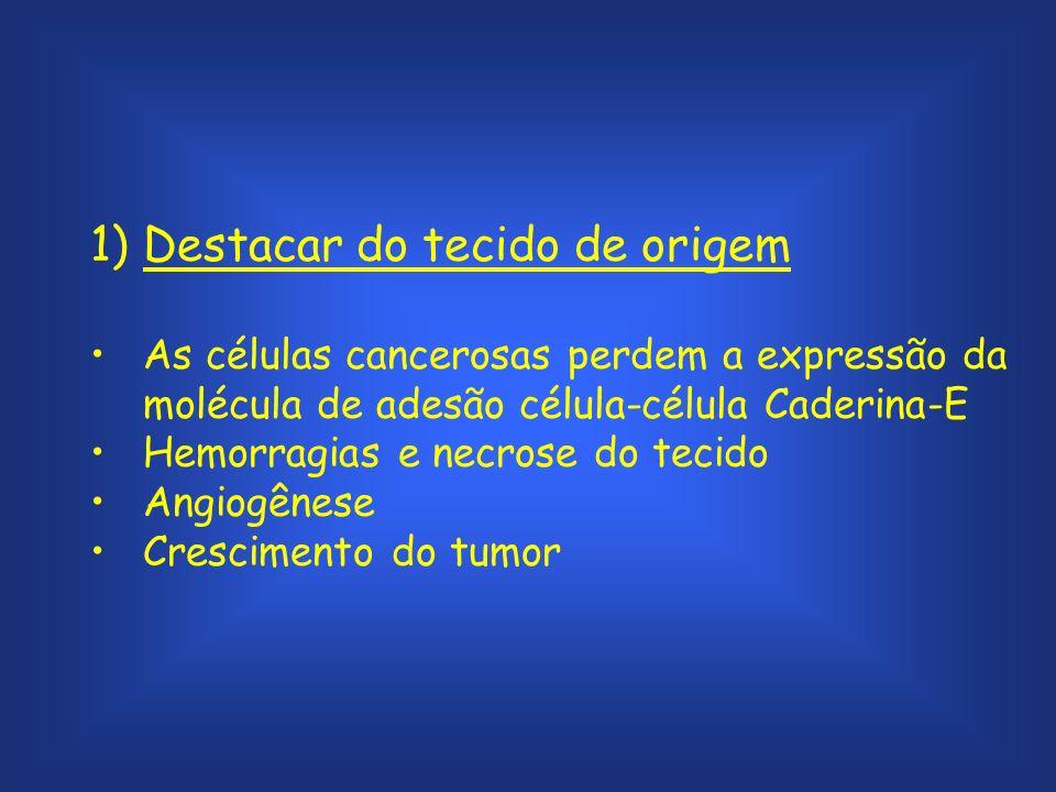1)Destacar do tecido de origem As células cancerosas perdem a expressão da molécula de adesão célula-célula Caderina-E Hemorragias e necrose do tecido Angiogênese Crescimento do tumor