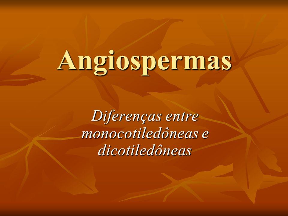 Angiospermas Diferenças entre monocotiledôneas e dicotiledôneas