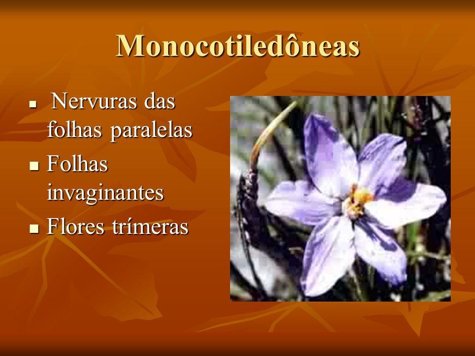 Monocotiledôneas Nervuras das folhas paralelas Nervuras das folhas paralelas Folhas invaginantes Folhas invaginantes Flores trímeras Flores trímeras