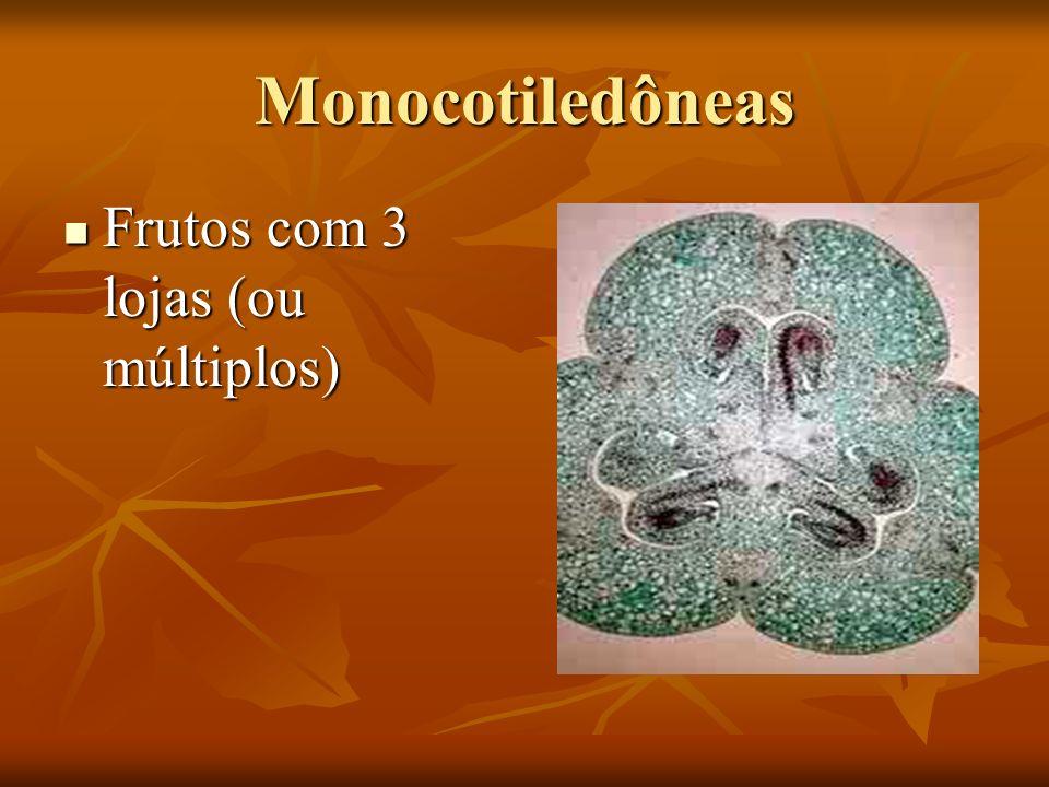Monocotiledôneas Frutos com 3 lojas (ou múltiplos) Frutos com 3 lojas (ou múltiplos)