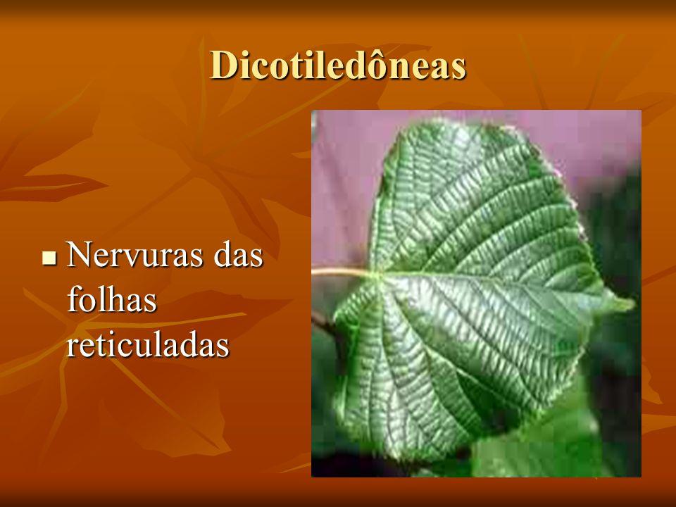 Dicotiledôneas Nervuras das folhas reticuladas Nervuras das folhas reticuladas