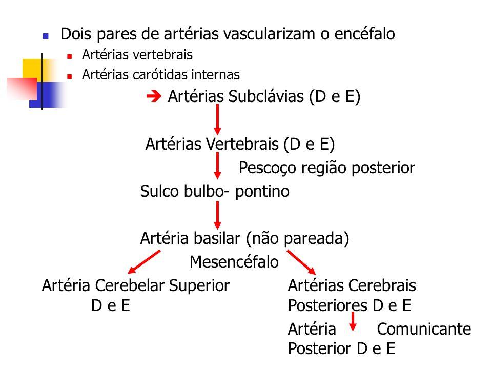 Dois pares de artérias vascularizam o encéfalo Artérias vertebrais Artérias carótidas internas Artérias Subclávias (D e E) Artérias Vertebrais (D e E)