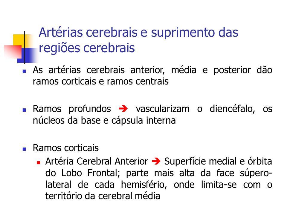 Artéria Cerebral Média Maior parte da face súpero- lateral de cada hemisfério (área motora, somestésica, centro da palavra falada) Artéria Cerebral Posterior irriga lobo occipital (área visual), superfície inferior do lobo temporal.