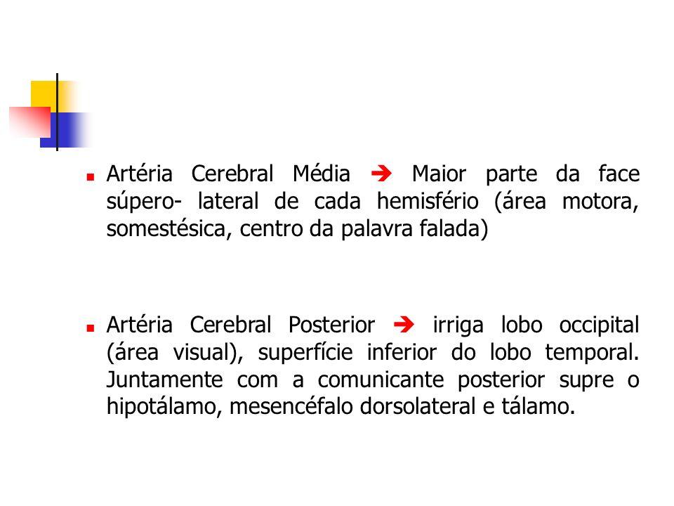 Artéria Cerebral Média Maior parte da face súpero- lateral de cada hemisfério (área motora, somestésica, centro da palavra falada) Artéria Cerebral Po