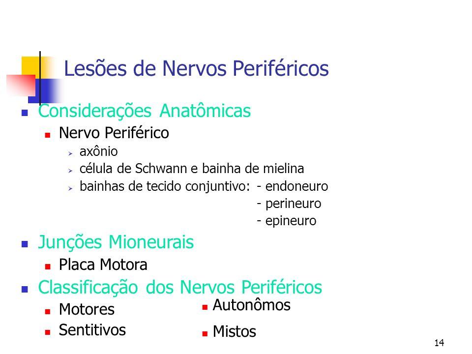 14 Lesões de Nervos Periféricos Considerações Anatômicas Nervo Periférico axônio célula de Schwann e bainha de mielina bainhas de tecido conjuntivo: -