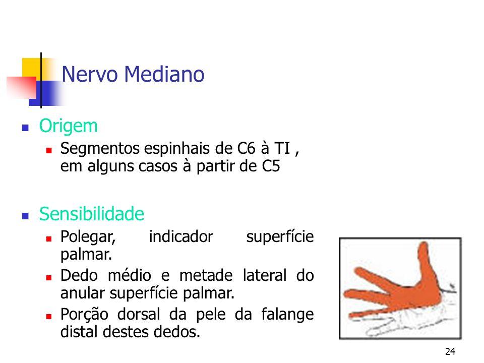 24 Nervo Mediano Origem Segmentos espinhais de C6 à TI, em alguns casos à partir de C5 Sensibilidade Polegar, indicador superfície palmar. Dedo médio