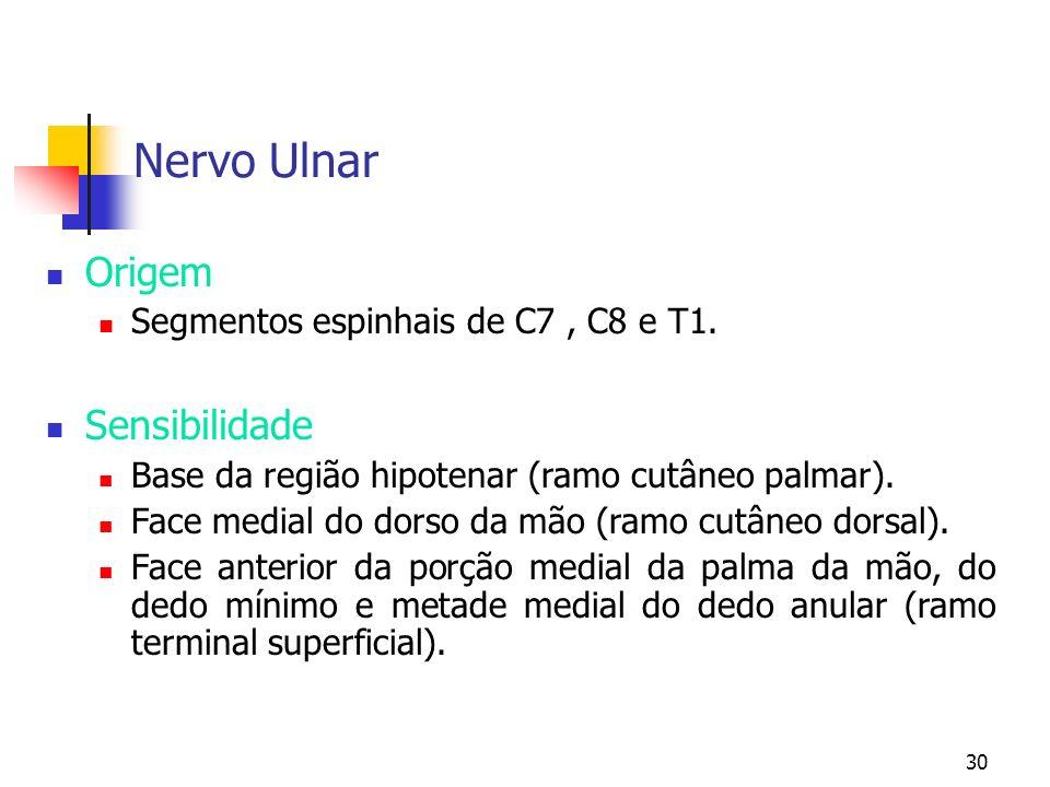 30 Nervo Ulnar Origem Segmentos espinhais de C7, C8 e T1. Sensibilidade Base da região hipotenar (ramo cutâneo palmar). Face medial do dorso da mão (r