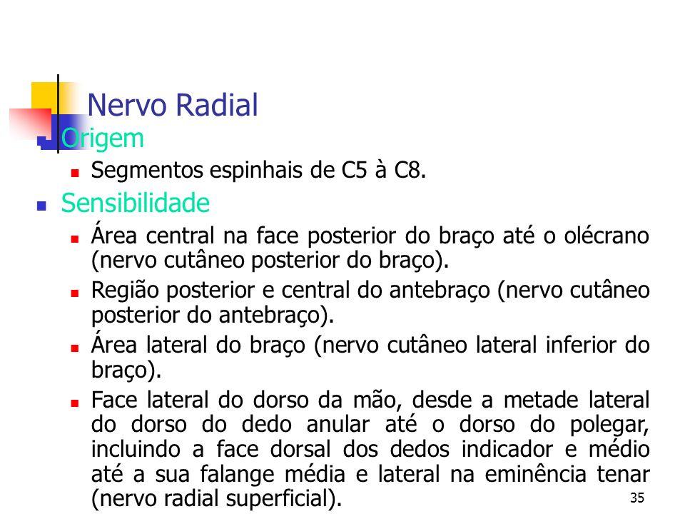 35 Nervo Radial Origem Segmentos espinhais de C5 à C8. Sensibilidade Área central na face posterior do braço até o olécrano (nervo cutâneo posterior d