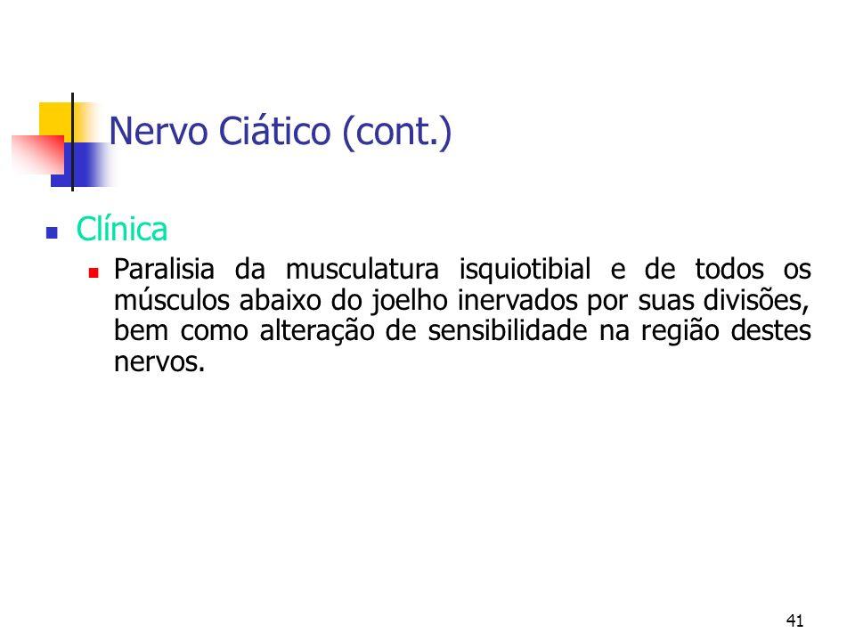 41 Nervo Ciático (cont.) Clínica Paralisia da musculatura isquiotibial e de todos os músculos abaixo do joelho inervados por suas divisões, bem como a