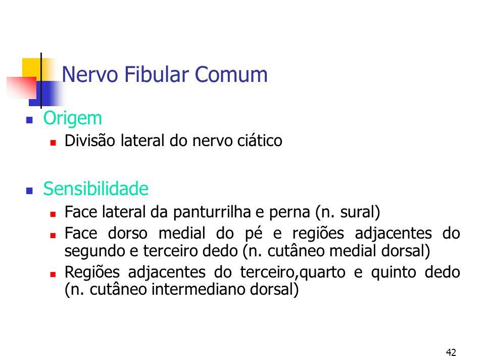 42 Nervo Fibular Comum Origem Divisão lateral do nervo ciático Sensibilidade Face lateral da panturrilha e perna (n. sural) Face dorso medial do pé e