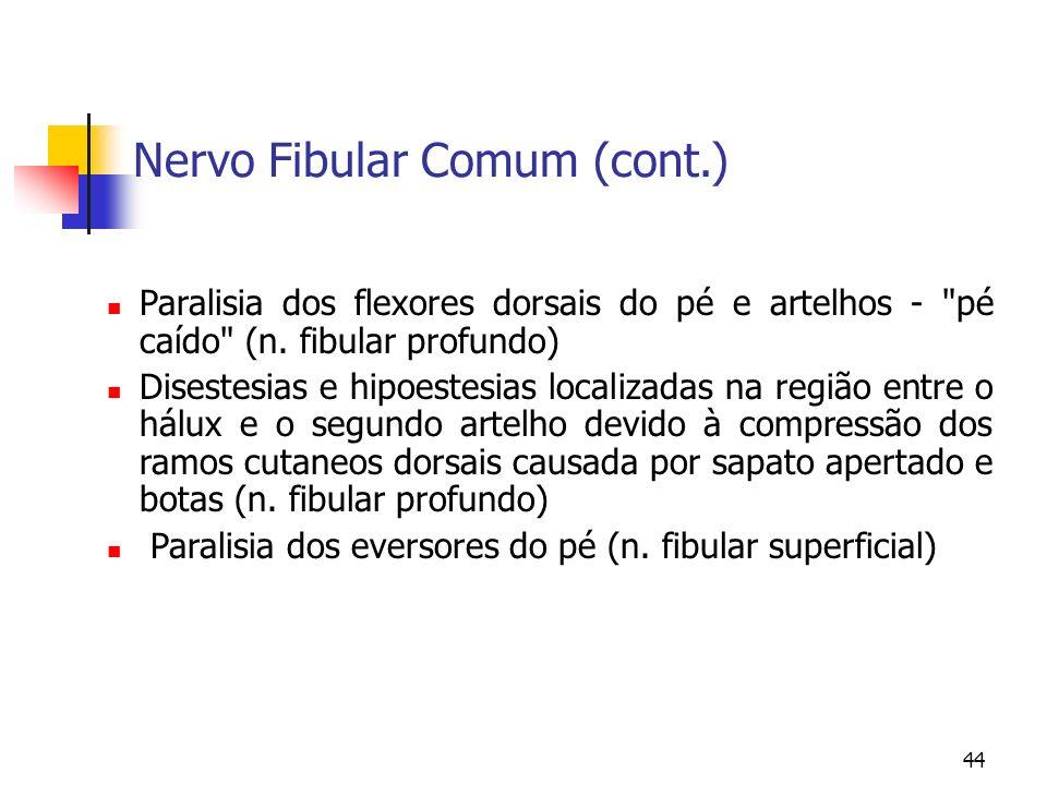 44 Nervo Fibular Comum (cont.) Paralisia dos flexores dorsais do pé e artelhos -