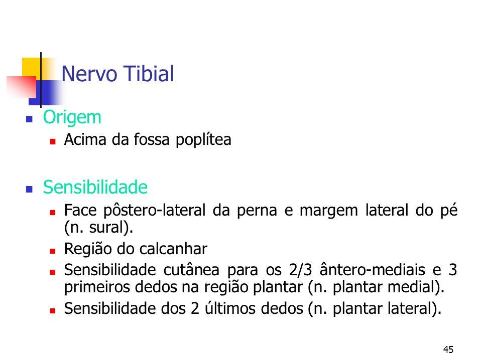 45 Nervo Tibial Origem Acima da fossa poplítea Sensibilidade Face pôstero-lateral da perna e margem lateral do pé (n. sural). Região do calcanhar Sens