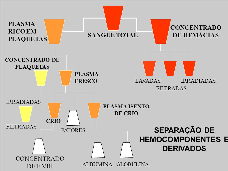 SANGUE TOTAL PLASMA RICO EM PLAQUETAS CONCENTRADO DE HEMÁCIAS LAVADAS FILTRADAS IRRADIADAS PLASMA FRESCO CONCENTRADO DE PLAQUETAS IRRADIADAS CRIO PLAS