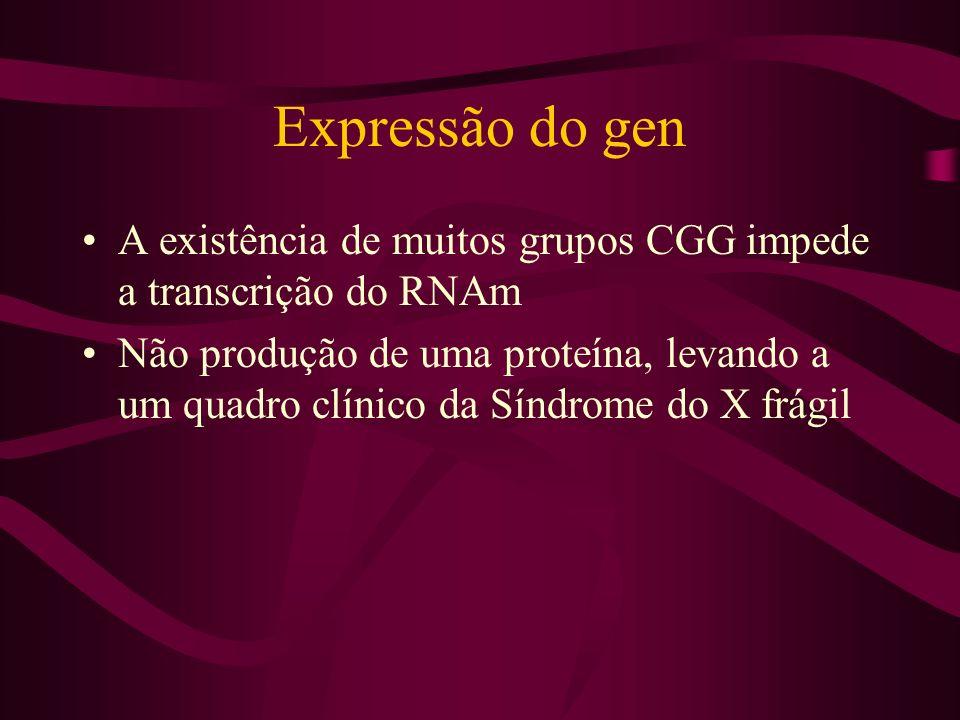 Expressão do gen A existência de muitos grupos CGG impede a transcrição do RNAm Não produção de uma proteína, levando a um quadro clínico da Síndrome