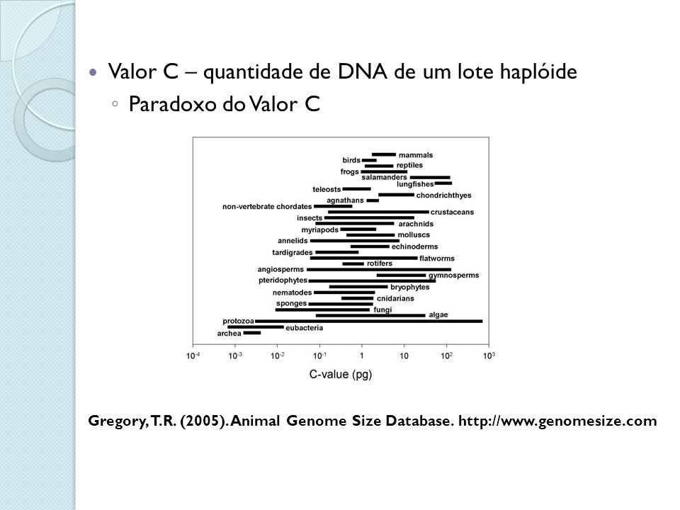 Valor C – quantidade de DNA de um lote haplóide Paradoxo do Valor C Gregory, T.R. (2005). Animal Genome Size Database. http://www.genomesize.com
