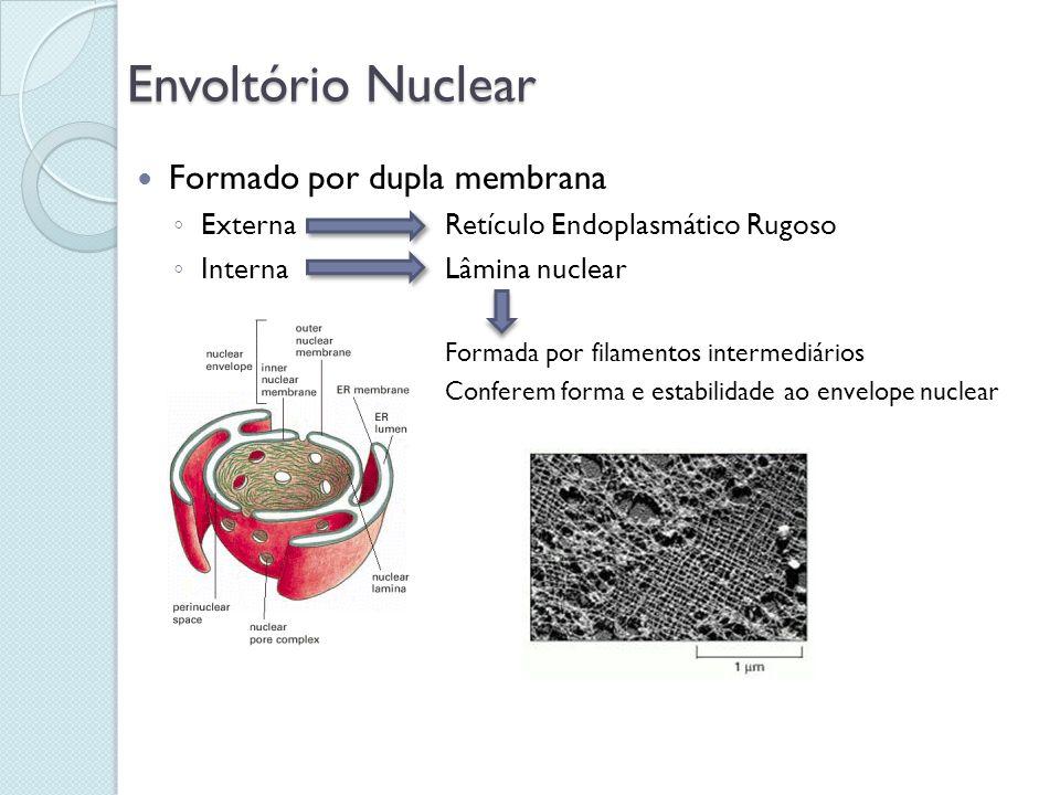 Envoltório Nuclear Formado por dupla membrana ExternaRetículo Endoplasmático Rugoso InternaLâmina nuclear Formada por filamentos intermediários Confer