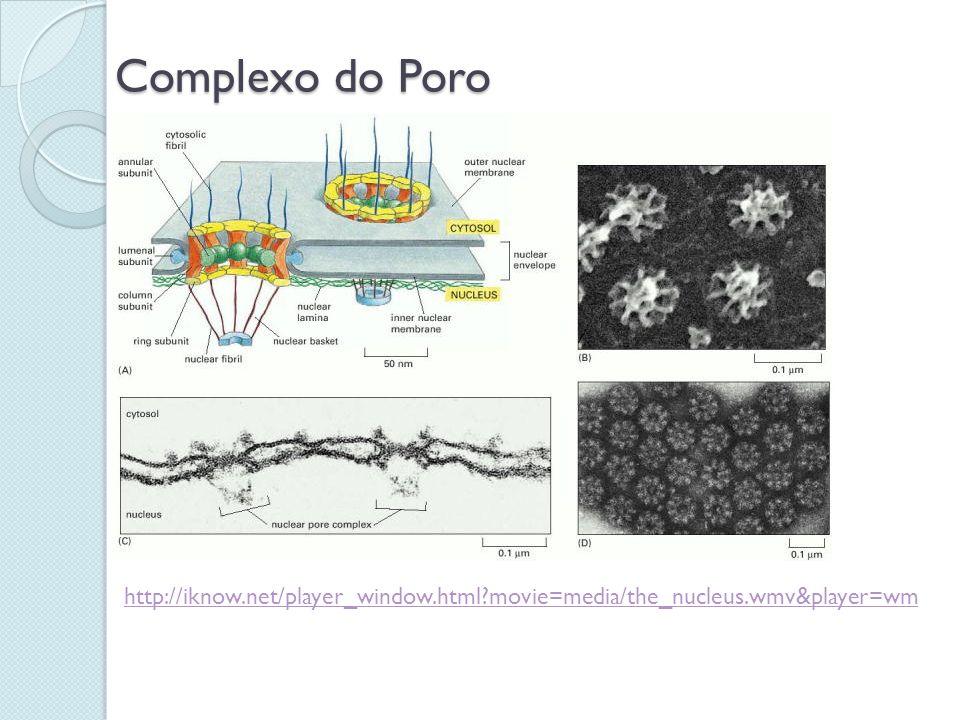 Complexo do Poro http://iknow.net/player_window.html?movie=media/the_nucleus.wmv&player=wm