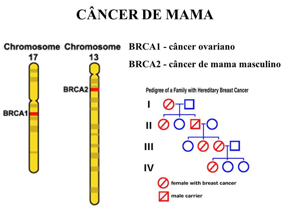 BRCA1 - câncer ovariano BRCA2 - câncer de mama masculino CÂNCER DE MAMA