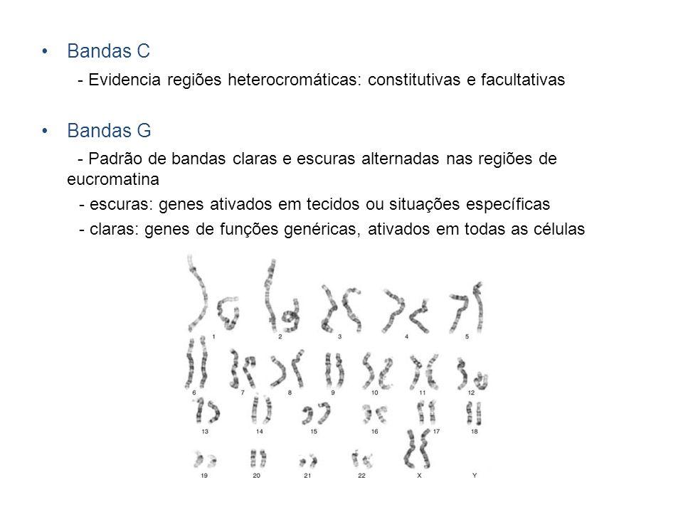 Bandas C - Evidencia regiões heterocromáticas: constitutivas e facultativas Bandas G - Padrão de bandas claras e escuras alternadas nas regiões de euc