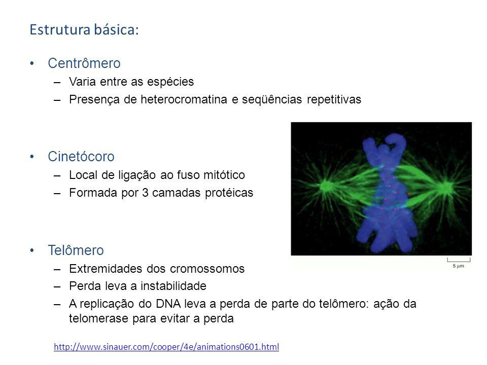 Estrutura básica: Centrômero –Varia entre as espécies –Presença de heterocromatina e seqüências repetitivas Cinetócoro –Local de ligação ao fuso mitót