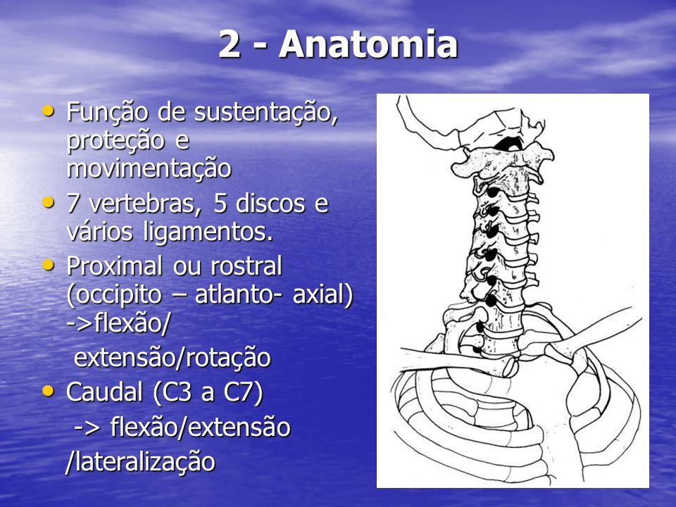 Ligamento longitudinal anterior à frente dos corpos vertebrais.