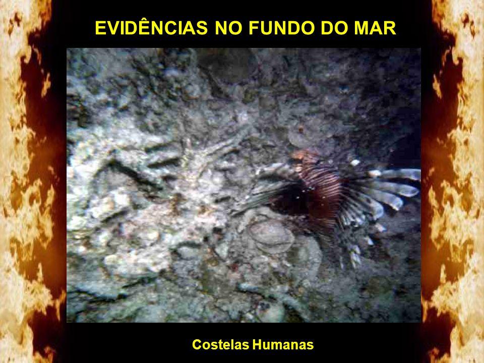 Abaixo estão alguns dos achados no fundo do mar em profundidades de até 60m a partir de 1978: Fêmur Humano EVIDÊNCIAS NO FUNDO DO MAR