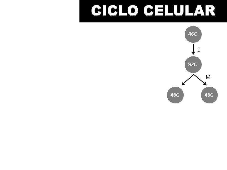 CICLO CELULAR M I 46C 92C 46C