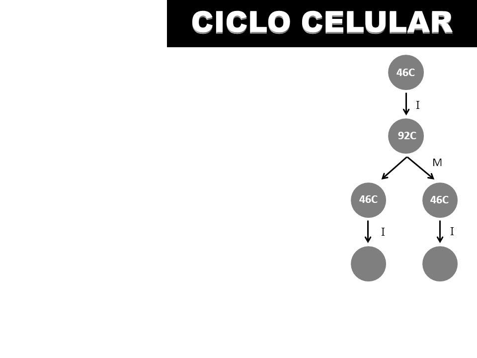 CICLO CELULAR M I I I 46C 92C 46C