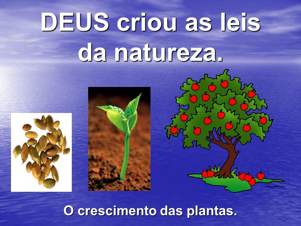 DEUS criou as leis da natureza. O crescimento das plantas.