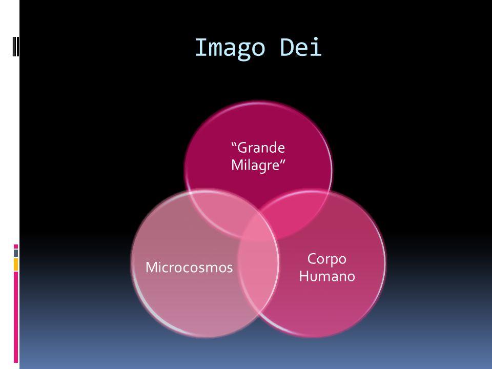 Imago Dei Grande Milagre Corpo Humano Microcosmos