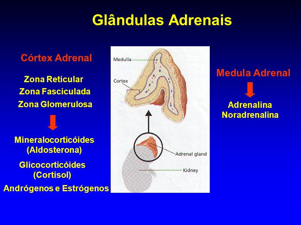 Medula Adrenal Córtex Adrenal Zona Reticular Zona Fasciculada Zona Glomerulosa Glândulas Adrenais Adrenalina Noradrenalina Glicocorticóides (Cortisol)